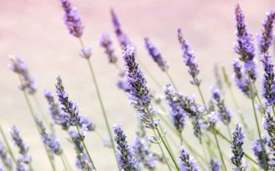 """Erdende """"So Ham"""" Meditation mit Lavendel"""